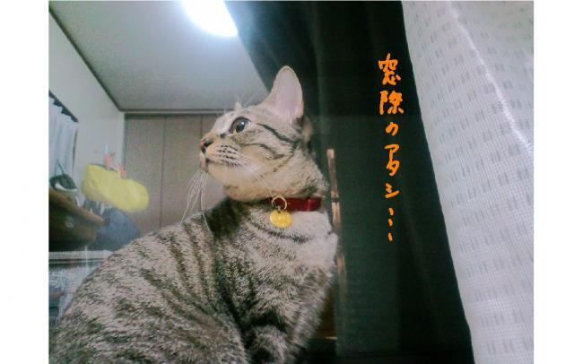 yuzu105.jpg