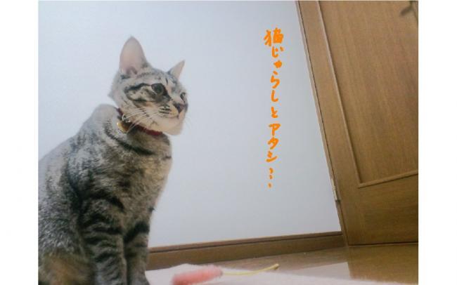 yuzu106.jpg