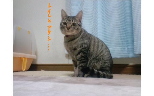 yuzu107.jpg