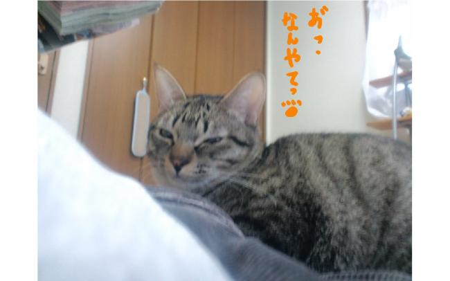 yuzu111.jpg