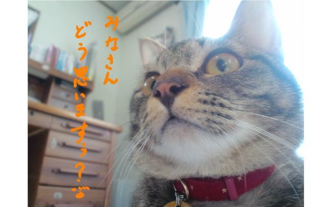 yuzu116.jpg
