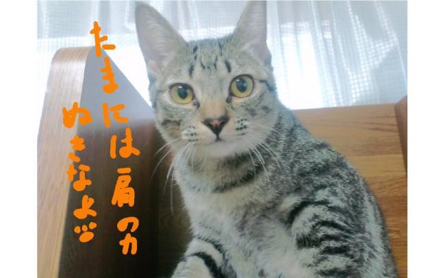 yuzu24.jpg