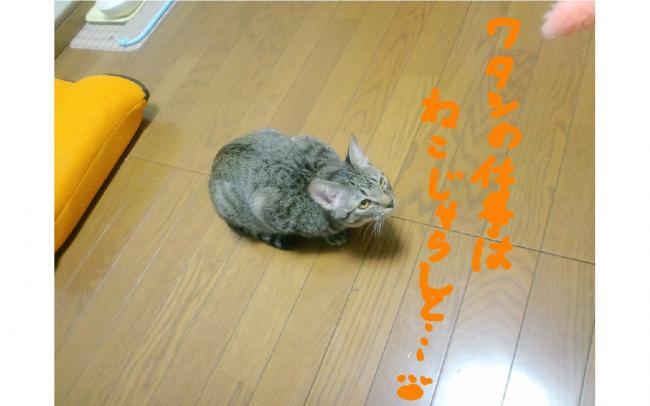 yuzu27.jpg