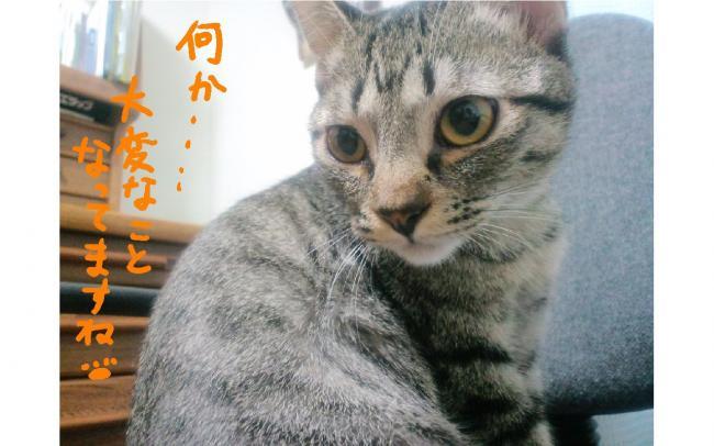 yuzu31.jpg