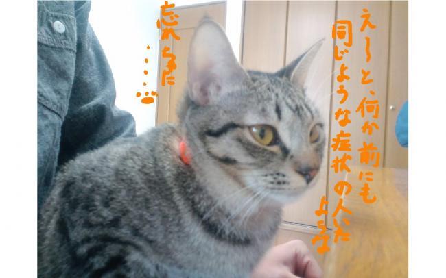 yuzu44.jpg