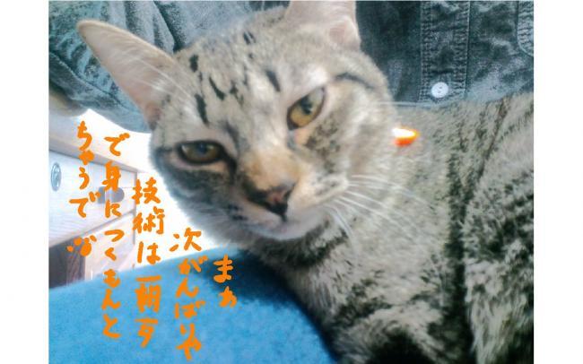 yuzu48.jpg