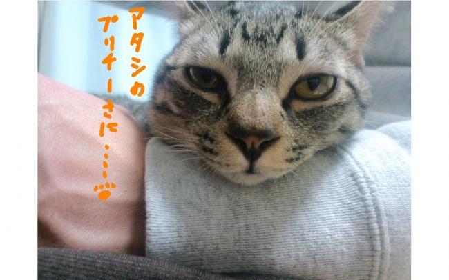 yuzu50.jpg