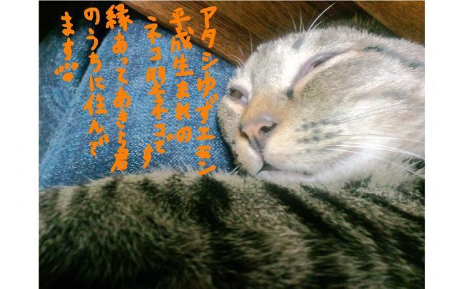 yuzu53.jpg