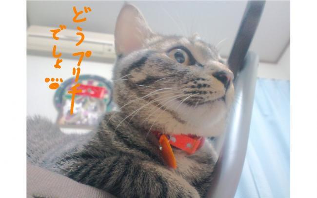 yuzu62.jpg