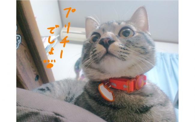 yuzu63.jpg