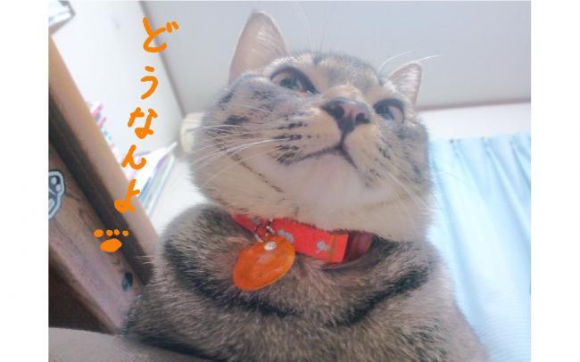 yuzu64.jpg