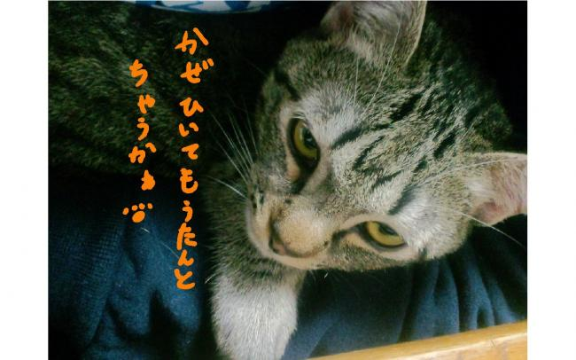 yuzu74.jpg