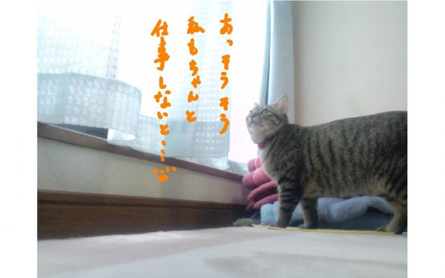 yuzu77.jpg