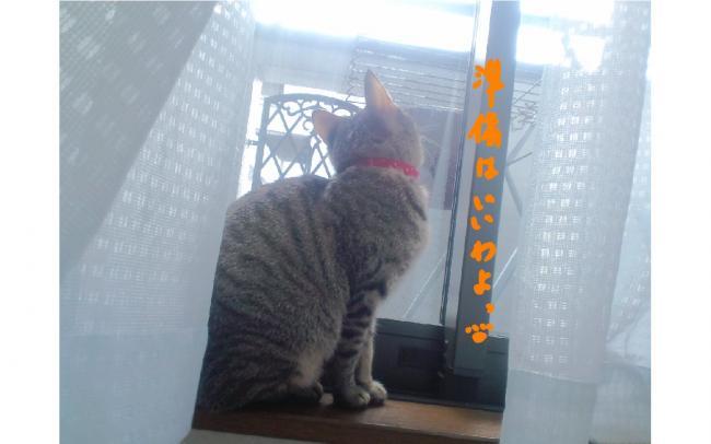 yuzu78.jpg