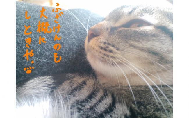 yuzu88.jpg