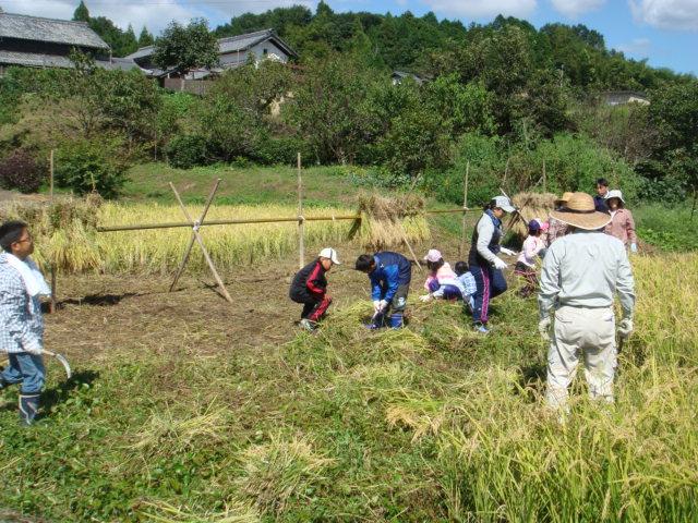 4年生の稲刈り
