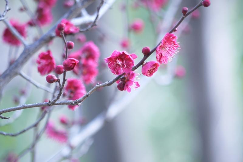 2010 03 06 羽根木公園 013