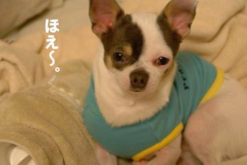 20091209_03ゆたんぽ