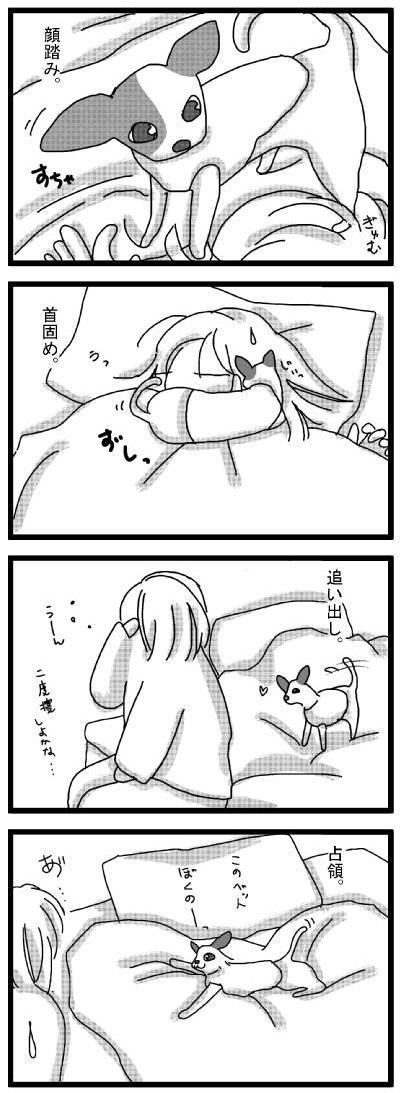 20100211_01にんじゃいぬ