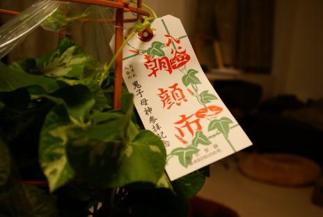20100707_04朝顔
