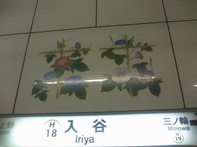 20100707_10朝顔
