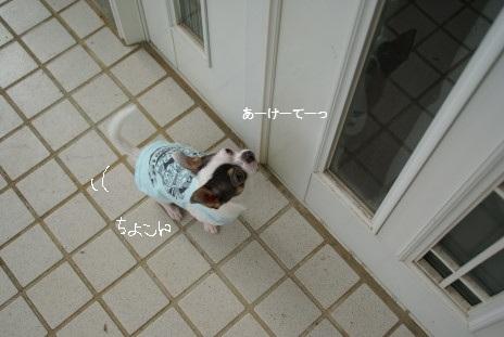 20100819_04なつやすみ