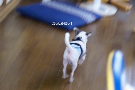 20100819_09なつやすみ