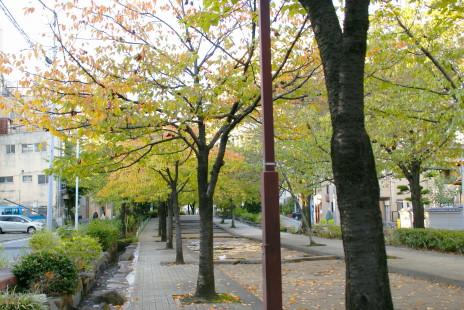 20101103_18skytree.jpg
