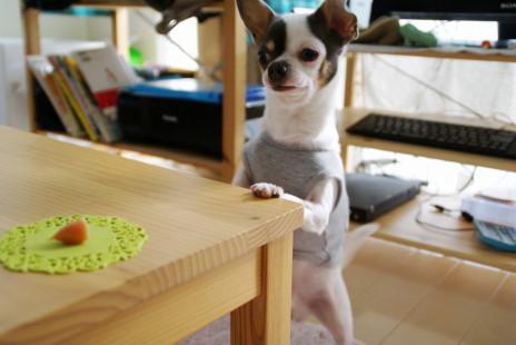 20101113_12oyatsu.jpg