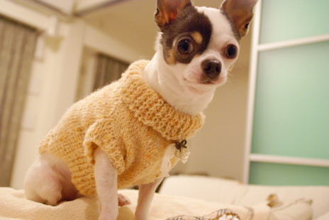 20101214_03sweater.jpg