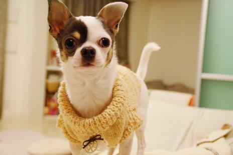 20101214_05sweater.jpg
