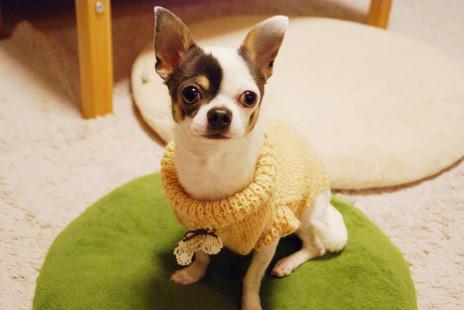 20101214_08sweater.jpg