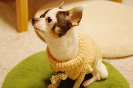 20101214_09sweater.jpg