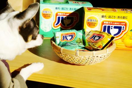 20110111_02babu.jpg