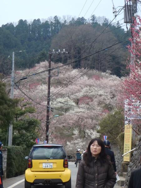 梅の公園入り口