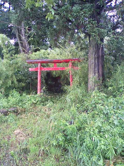 田んぼの中の稲荷神社3