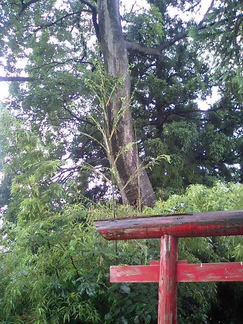 田んぼの中の稲荷神社4