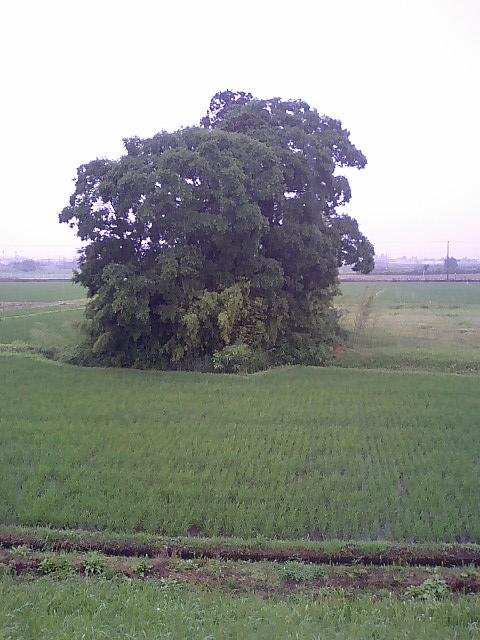 田んぼの中の稲荷神社12