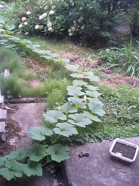 庭の作物4