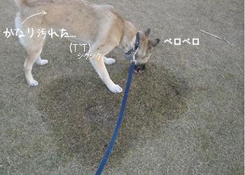 20091203-01 (9)-01