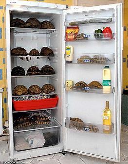 fridgeDMLM2502_468x600.jpg