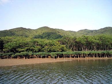 mangrov22.jpg