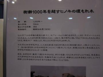 jinndaihinoki_0002.jpg
