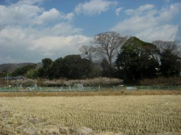 mejiro_0004.jpg