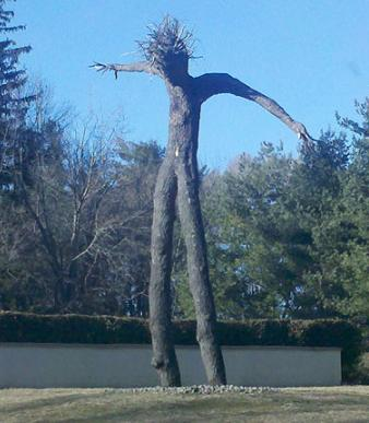 何かにビックリしている木!