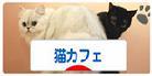 DSC_0001のコピー