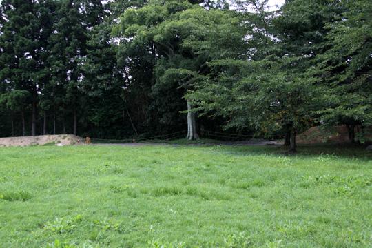 20090816_tagajo_castle-24.jpg