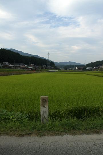20090919_shitaragahara-13.jpg