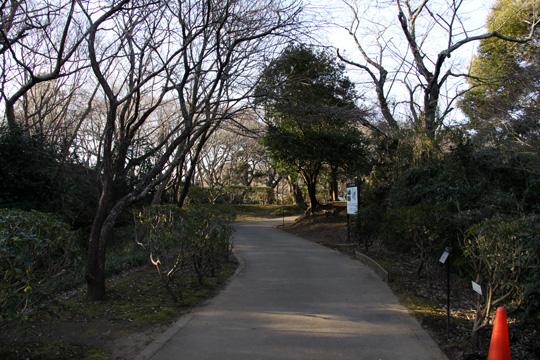 20100116_sakura_castle-17.jpg