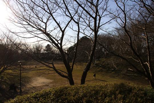 20100116_sakura_castle-23.jpg